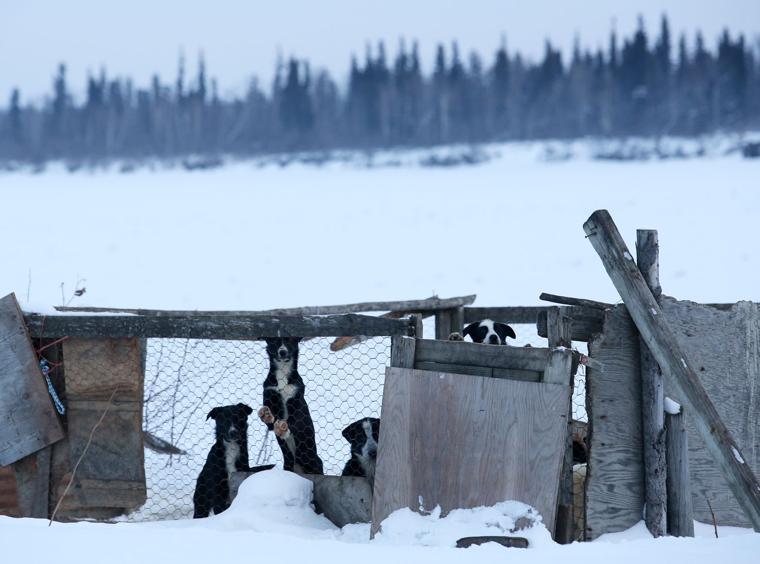 Mushing a flickering flame in interior alaska villages - Interior women s health fairbanks ak ...