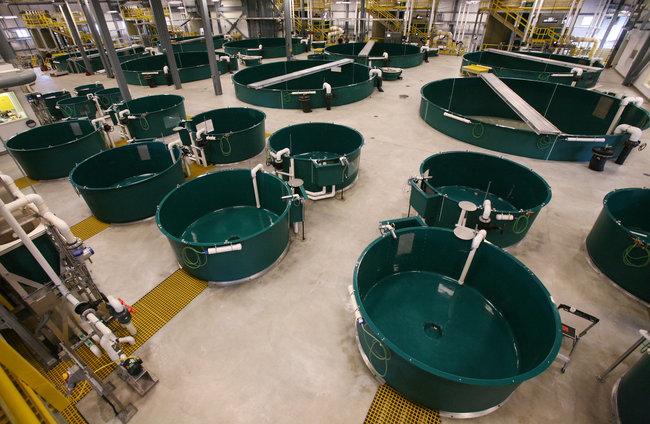 One year late 46 million fairbanks fish hatchery remains for Fish hatchery jobs