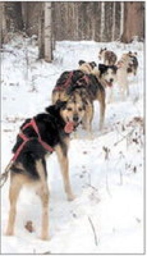 Check it out: Mushing 101