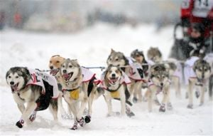 Iditarod mushers hit the trail, ceremonially, in Anchorage