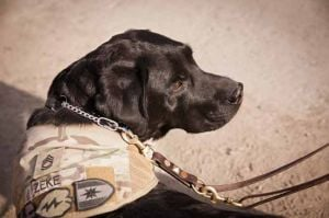 The dog of war: Sgt. 1st Class Zeke helps Fairbanks-based soldiers deal with stress
