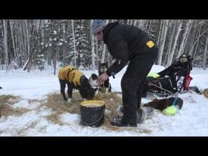 The 2015 Yukon Quest