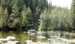 Fairbanks group tries to eliminate invasive weed along Chena Slough