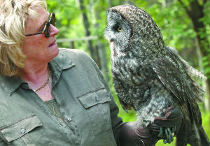 So long, Earl: Fairbanks says goodbye to its most famous owls