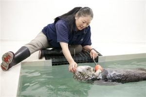 1 of last 2 sea otters rescued from Exxon Valdez oil spill dies