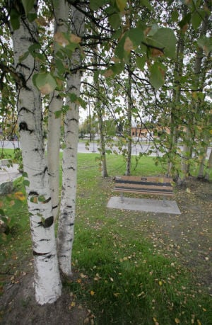 Anonymous donor sponsors memorial tree in Weeks Field Community Park