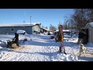 Learning to Mush Dogs in Huslia, Alaska