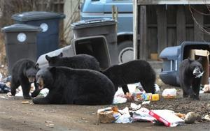 Biologists capture all 5 bears out of Anchorage neighborhood