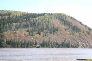 New study states boreal forests shifting as Alaska warms