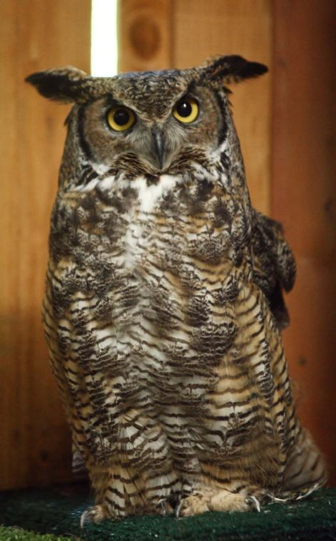 Educational Owls Move To Anchorage