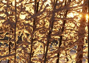 Fairbanks' snowless November may, or may not, end this weekend
