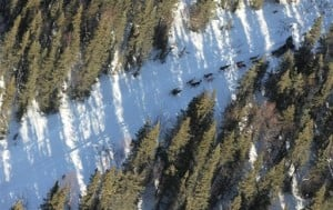 Herbst reaches ghost town of Iditarod as mushers finish layovers; Mitch Seavey withdrawn