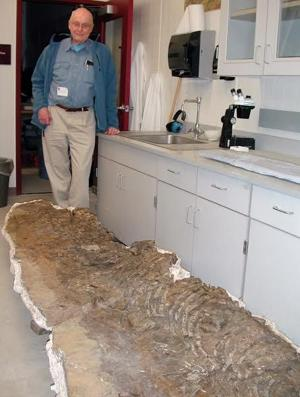 210-million-year-old ichthyosaur found in Alaska's Brooks Range identified
