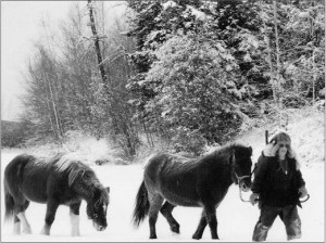 Wayward horses return after summer roaming Alaska wilderness