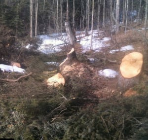 State closes Rosie Creek logging road after illegal firewood cutting