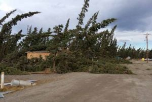 Strong winds damage power lines, trees in Interior Alaska