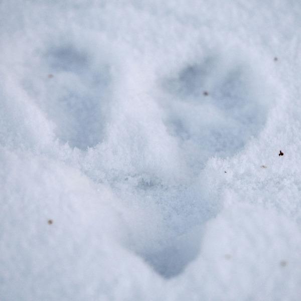 Porcupine Tracks and Sign  ouroneacrefarmcom