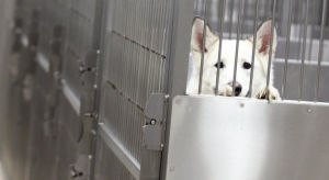 Fairbanks animal shelter fees could see a repackaging
