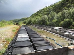 Gulkana hatchery a high-country Eden for sockeye salmon