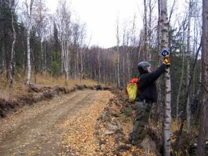 State parks builds new trail in Chena River State Rec Area