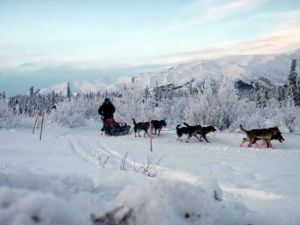 Extreme dream: Cindy Abbott trains for Iditarod to raise awareness of rare disease