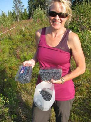 Fairbanks area's berry crop is a good one but don't ask me where to go