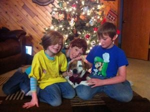 Community effort brings lost, blind dog home for Christmas