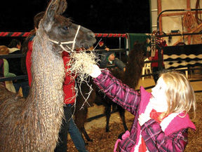 <p>A petting zoo is one of the family activities at Christmas at the Farm.</p>