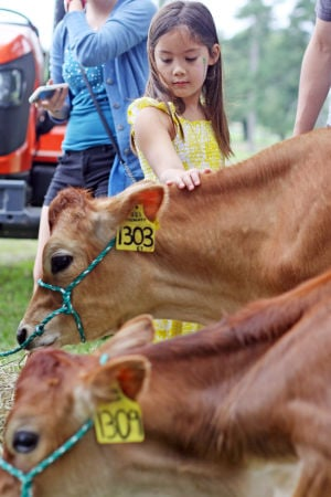<p>Annabel Lee, 7, pets a Jersey calf at the Berry Farmers Market at Berry College, July 13, 2013. (Brittany Hannah/RN-T)</p>