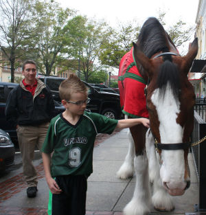 <p>Davis Yeargan, 10, of Rome, pets Prince, the Budweiser Clydesdale from St. Louis, on Friday in front of Johnny's New York Style Pizza. (Carolyn Grindrod, RN-T)</p>