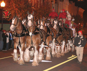 Budweiser Clydesdale will be on Broad Street Friday