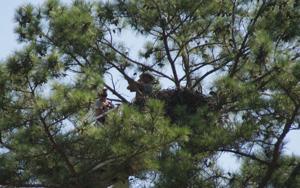 New nest cam going up