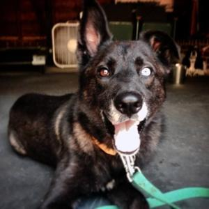 More than Able: Rescued dog proves to be hero