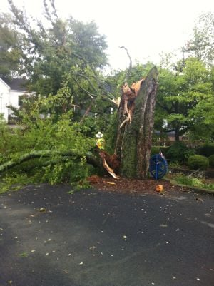 Huge tree falls in parking lot of Advertising Dynamics, takes out power pole