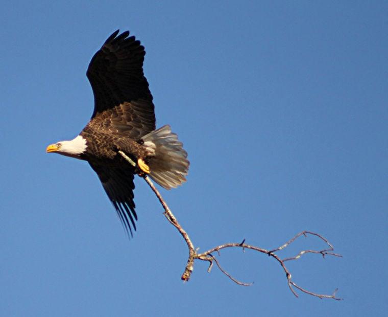 Berry Eagle