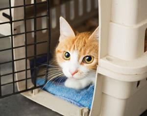 Project CatSnip, vaccines being offered tomorrow