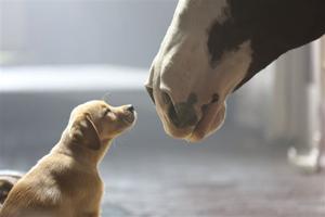 Super Bowl Ad Anheuser-Busch