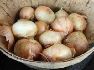 Cedartown Kiwanis 27th annual onion sale under way