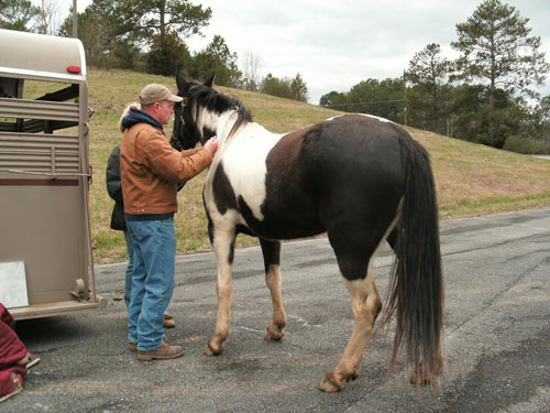 Horse Care Clinic