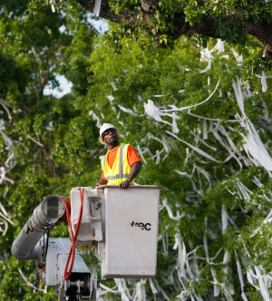 Removal of oaks at Toomer's Corner 06 LC