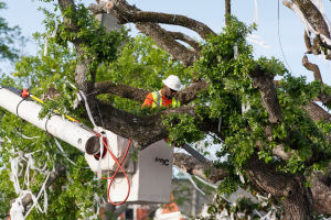 Removal of oaks at Toomer's Corner 09 LC