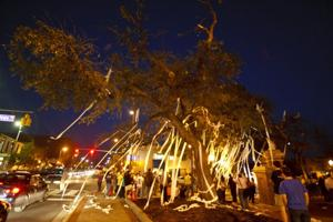 Toomers Trees Poisoned