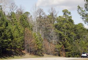 Pine beetle outbreak has land owners, timber industry worried