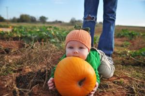 Grider Pumpkin Patch