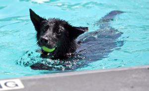 Papio Bay Dog Day