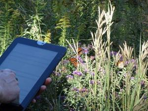 Tracking butterflies? Iowa State University students devise app to collect data