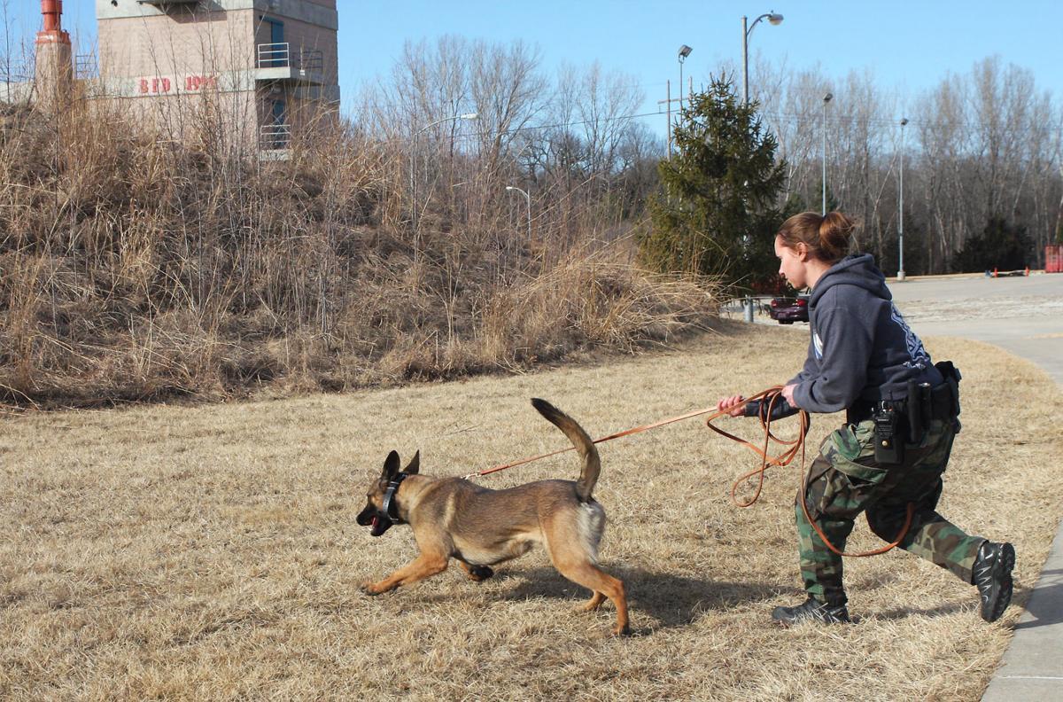 Service Dog Training Omaha Ne