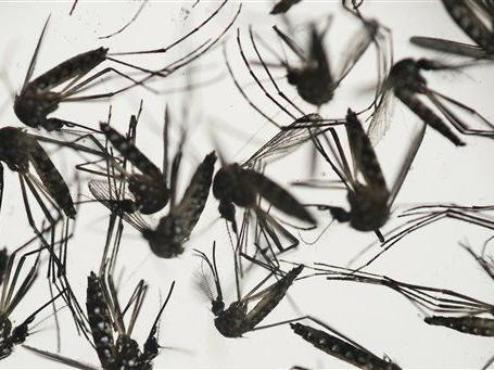 Omaha-area resident is state's first pregnant Zika patient