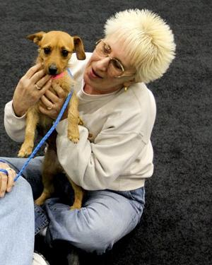 More employers offer pet insurance as perk