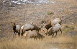 Wildlife photography: Hunting with a camera